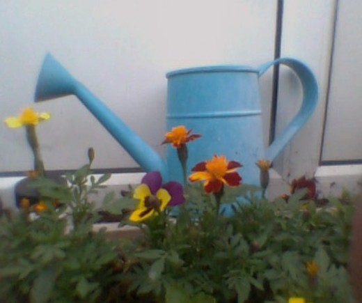 Add a bit of color with a blue watering can Photo Copyright Nell Rose