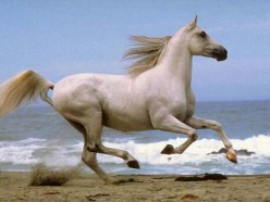 El Bobo: The White Horse