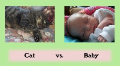 Similarities Between My Cat and My Baby (Humour)