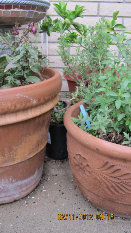 Some plants need to have their pots shaded from direct sun to keep their roots cool.