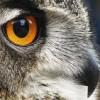 choboo2 profile image