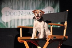 Dogs With Non-Lead Movie Roles