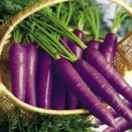 Purple carrots.