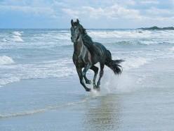 The Horse's Bit