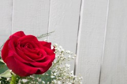 Roses: Different Colors, Meanings, and Tips To Making Them Last Longer