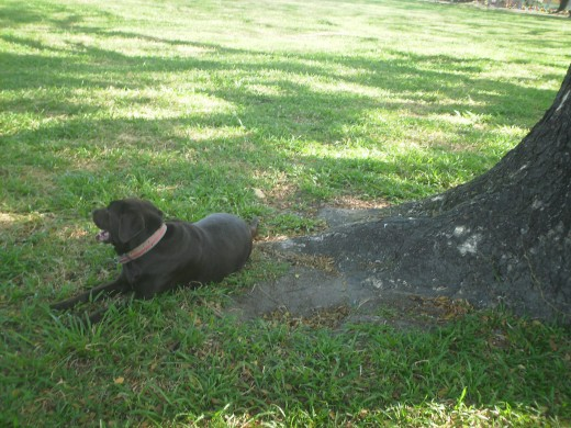 My Labrador Tenkay  and I sit here after a few minutes walk to rest and sometimes for meditation purposes.