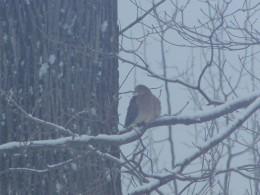 Birds In Our Backyard 2