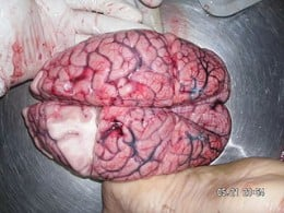 A human brain.  I know it looks weird but just try not to think about it!