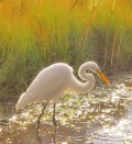Hilton Head Island History, Wildlife and Ecology