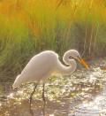 Hilton Head Island History, Wildlife and Ecology