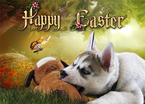 Easter card featuring my Siberian Husky puppy Lara at about 2 months old.