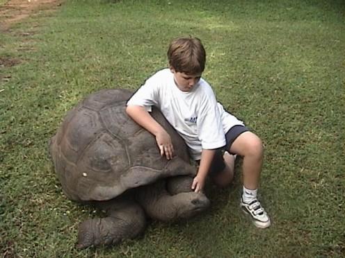 Aldabra Tortoise at Haller Park