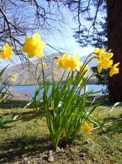 Spring in Broadford