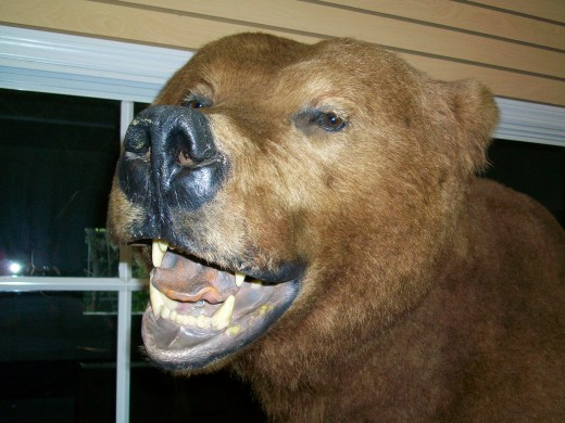 This friendly bear welcomes you to the Busch Wildlife Sanctuary.