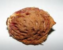 Are peach pits edible?