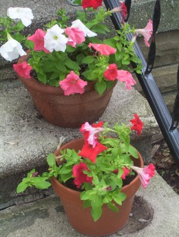 Cheerful pots of petunias definitely help an entry feel more welcoming.