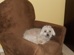 I have mini kid couches the dog kids like. Ten days later, he is a little rounder.