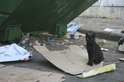 stray cats living among litter