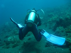 The rewards of diving the reef far outweigh any risks to the diver.