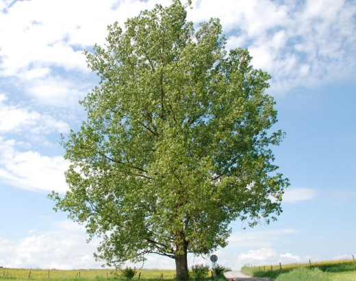 Writing on an evergreen topic is like planting a tree that is going to bloom all year round, for years to come.