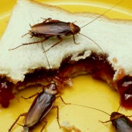 Fear of cockroaches  or tainted food