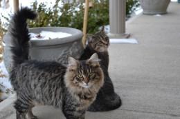 Kitty outdoors