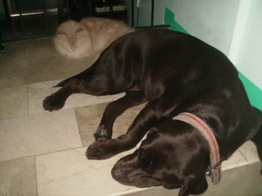 Sabrina with her friend TENKAY,  my choco Lab