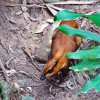 Bedtime Story - Story of Mouse Deer and a Farmer - A Children's Story