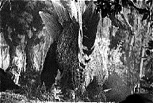 Stegosaurus as depicted in King Kong