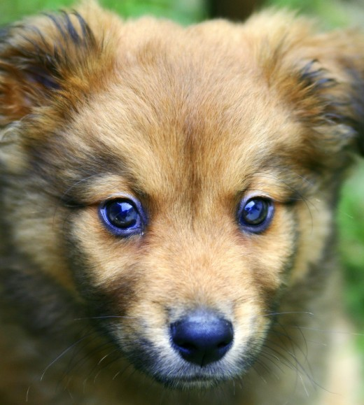 Chow Retriever mix name Misha