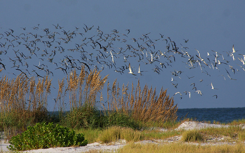 Wildlife in Fort De Soto