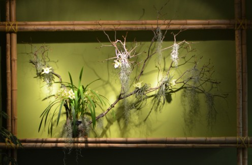 Chinese Orchid Show in Saint Louis - Display with bamboo and branches and orchids.