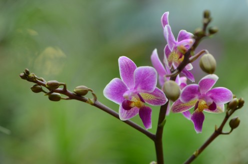 I love the colors of these orchids, and how it turned out.