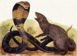Domestic Abusers of Women - A Mongoose Can Deal With A Snake - You Are Not A Mongoose