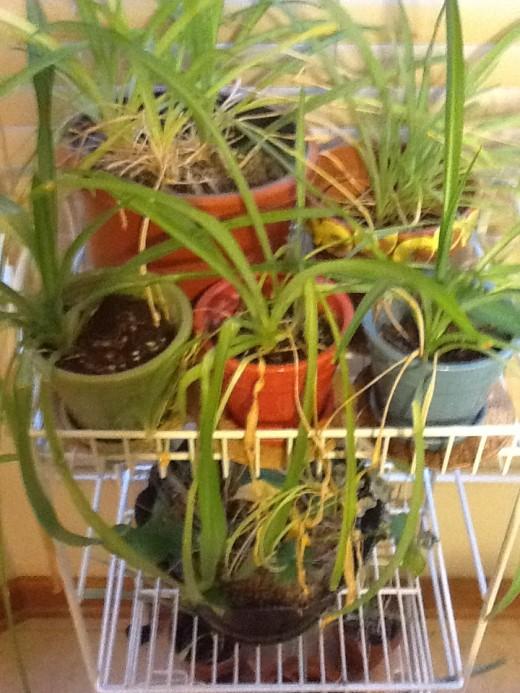 Houseplants on a rack