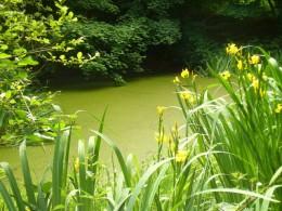 How To Remove Green Pond Algae