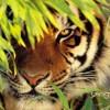 muhammadrazi profile image