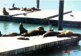 Sea Lions resting at Fisherman's Wharf