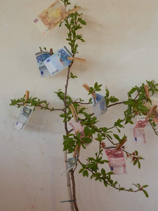 a fruiting money tree (pegs are used to prevent the notes from being carried away in the wind)