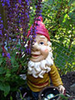 Just a Garden Gnome...nothing to See here...