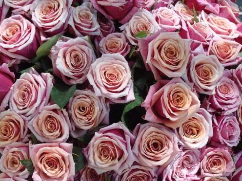 Rose bunch, Rosa sp. cultivars, flower market, Place Monge, Paris