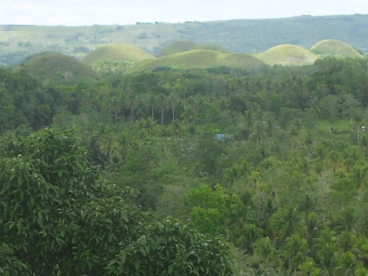 This was taken last February 26, 2012. The rain was not supposed to come until June. Normally, this time of the year the hills are covered with dried grass and are colored chocolaty brown.