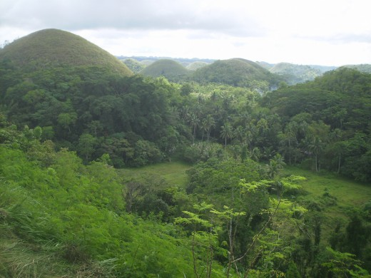 The conical hills are green during the rainy season and are surrounded by verdant trees mostly mahogany, acacia, coconut, and bamboo.