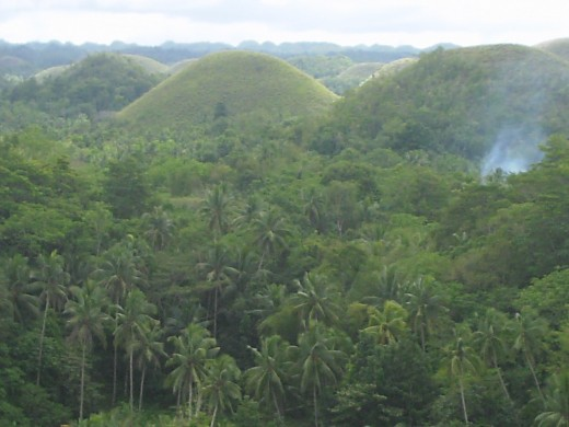 The local farmers plant coconut trees around the hills, the produce of which is the raw material for virgin coconut oil.