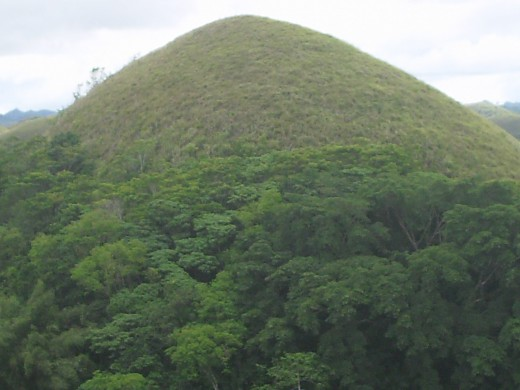 A closer view of one of the 'choco hill'. The height of the dome is approximately 55 meters. The grass is still green because of the weather phenomenon, El Nina. Rain still comes intermittently even though it is now considered summer.