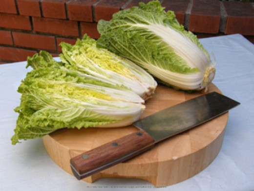 Napa Cabbage all grown up.