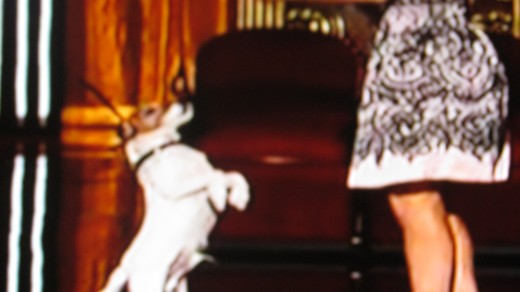 "Kelly played with Uggie, one of the top actors from movie, ""The Artist."""
