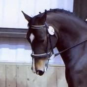 equestrianism profile image
