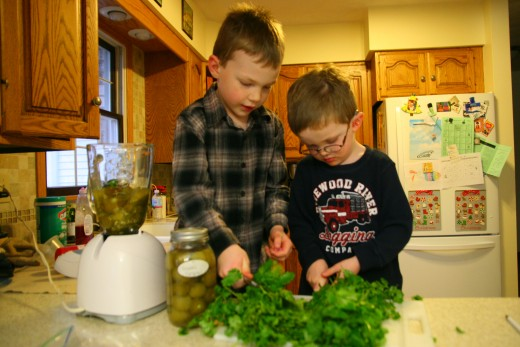 A six year old and four year old can cut the stems off of the cilantro with a butter knife.