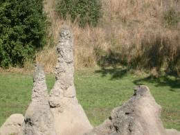 Huge ant mounds dot the landscape of Harambe Wildlife Reserve